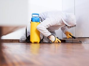 Hiring The Services Of Pest Control Companies